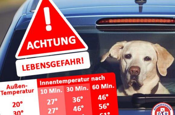 HITZEFALLE AUTO: Bereits ab 20° Lebensgefährlich