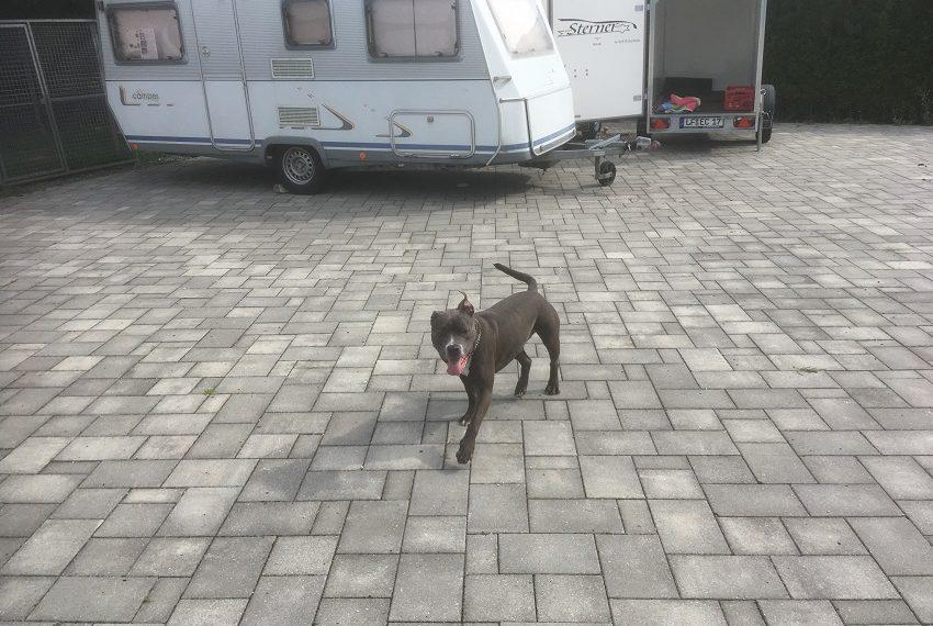 Fundhund Sam